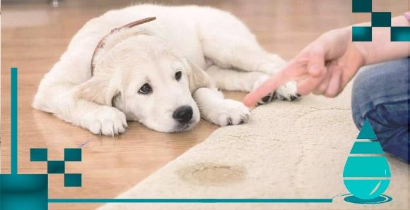eliminar olor a orina de perros